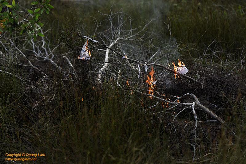 Ashes Skeleton