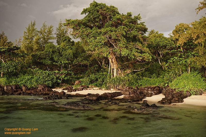 Phu Quoc tree