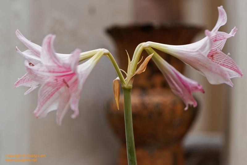 Composite of Ceramics and Flowers #3