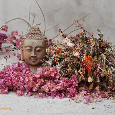 Fine art photo print Nature Flowers Garden Buddha Flowers