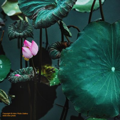 Fine art photo print Nature Flowers Garden