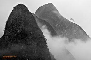 In the mist | Trong sương mù