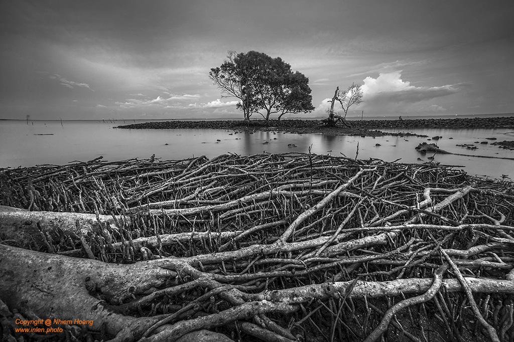 Mangrove | Rừng tràm