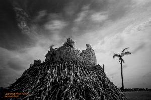 Roots | Rễ
